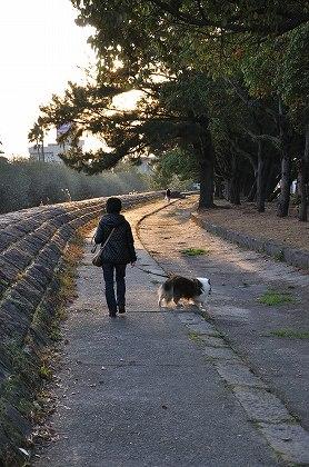 見つけた散歩コース