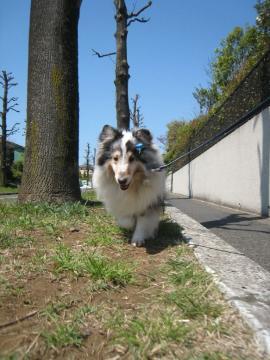 久しぶりの散歩道♪