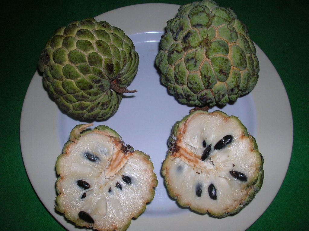 Custard-Apple.jpg