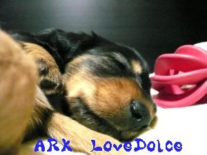 071229-ARK1.jpg