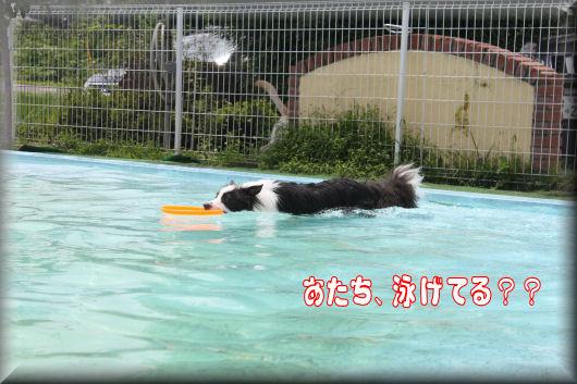 泳いでるのかな??