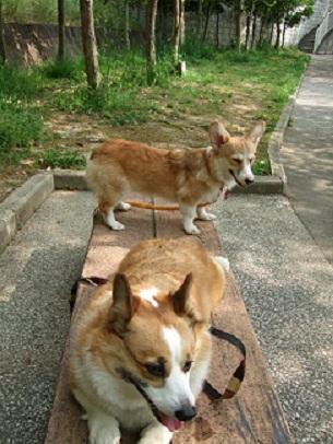 近所の公園をお散歩中