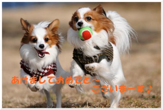 DSC_5707.jpg