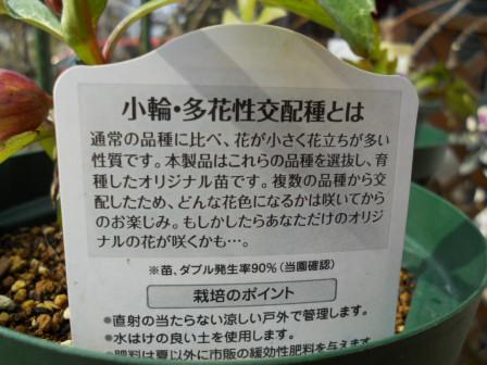 kuriro11-32-2.jpg