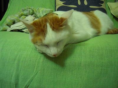 20110504ichigo.jpg