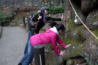 kinomiyajinja1_20110405233548.jpg