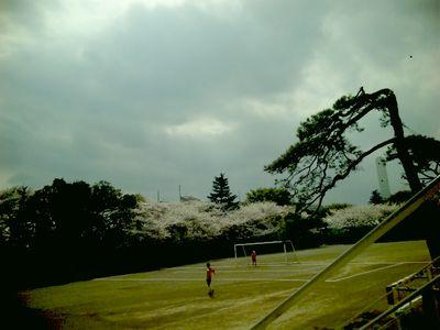 桜でサッカー