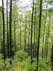 分杭峠妖精の森