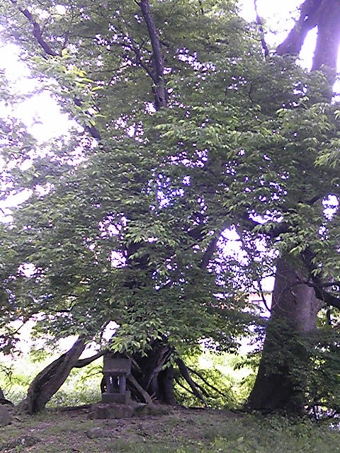 諏訪大社前宮妖精の島