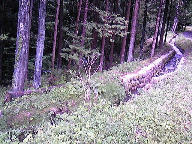 諏訪大社前宮妖精の森紫