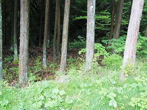 諏訪大社前宮妖精の森