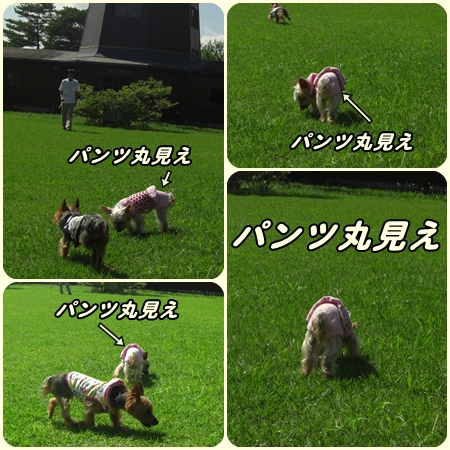 cats1_20090816114439.jpg