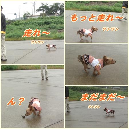 cats1_20090929220521.jpg