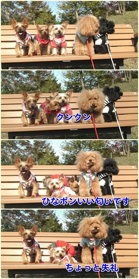 cats1_20091023144922.jpg