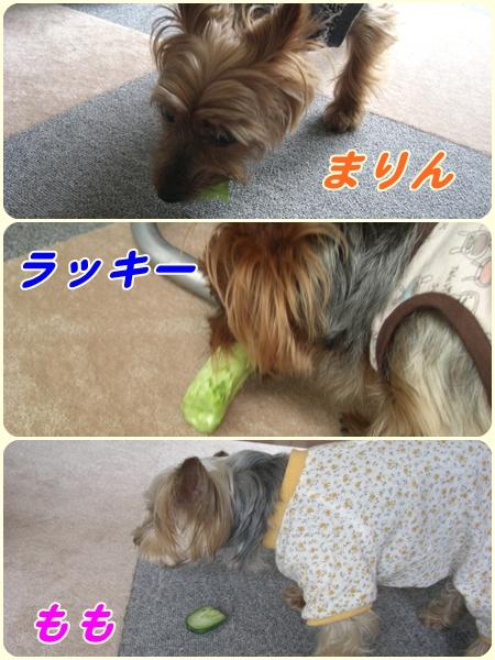 cats6_20090801221115.jpg