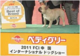 フレンチ・ブルドッグ♀のBOB犬