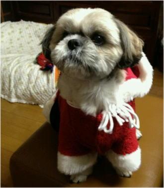 サンタさんになったプリン君♪