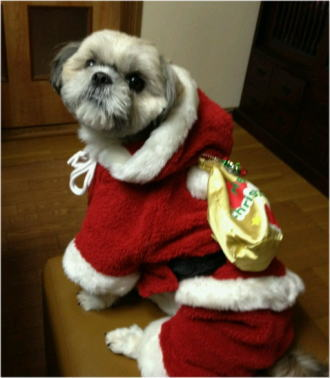 「メリー・クリスマス♪」プリン君(^_-)-☆