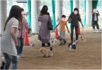 アトラクションの参加犬