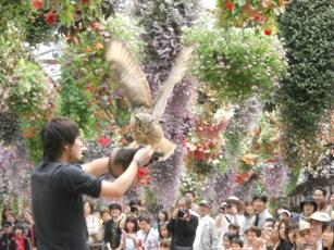 富士花鳥園 フクロウのショー