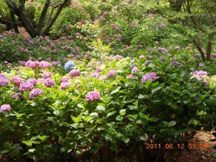 牧ノ原の秋葉公園2