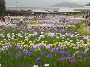 加茂花しょうぶ園2