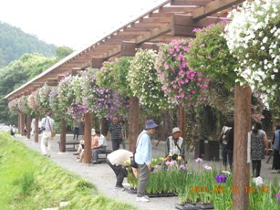 加茂花しょうぶ園4
