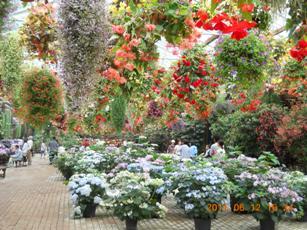 加茂花しょうぶ園5