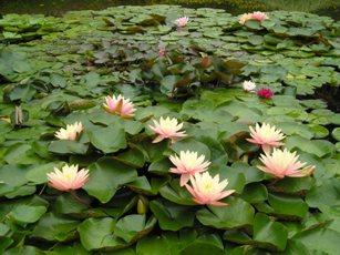 草津市立水生植物園「みずの森」2