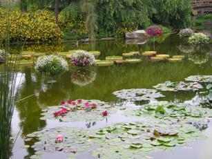 草津市立水生植物園「みずの森」4