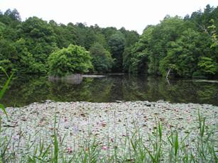 大池寺の弁天池
