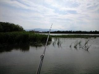2011-7-3 雷魚 (2)