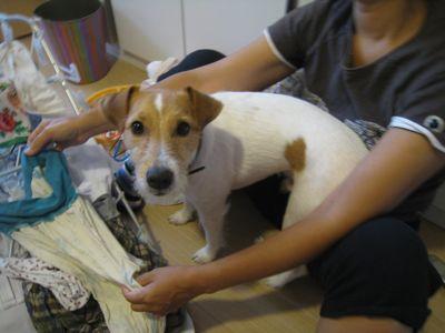 洗濯物犬1