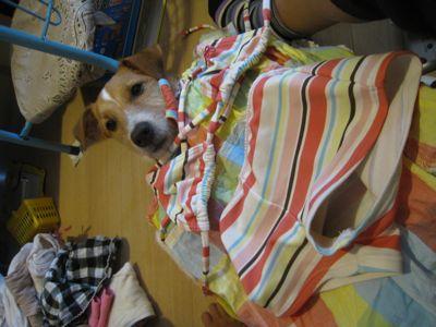 洗濯物犬4
