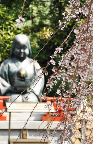 京都さくら2