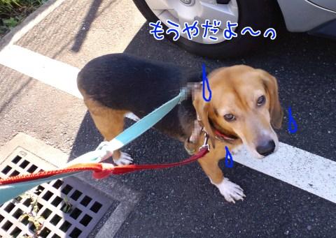 20111027-01.jpg