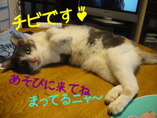tibi_R.jpg