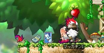 Maple7434a.jpg