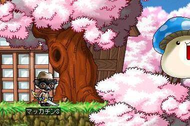 Maple7460a.jpg