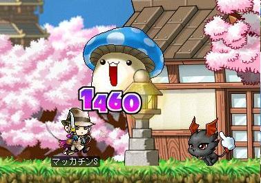 Maple7524a.jpg