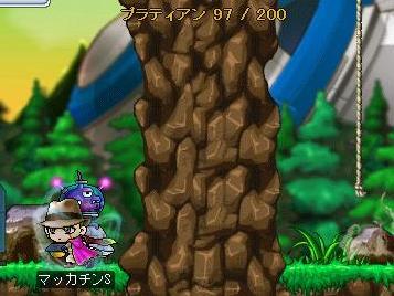 Maple7670a.jpg