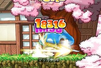 Maple7675a.jpg