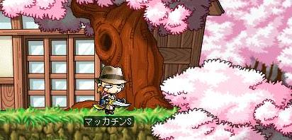Maple7706a.jpg