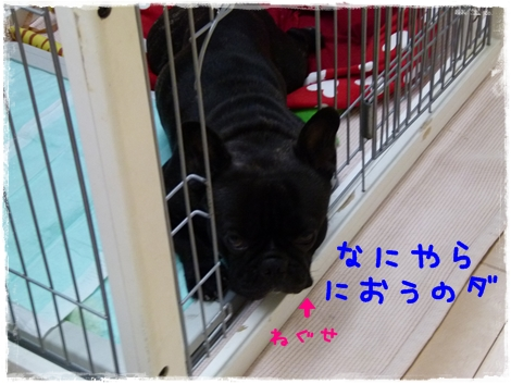 hanamizu7.jpg