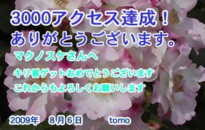 20090809-02.jpg