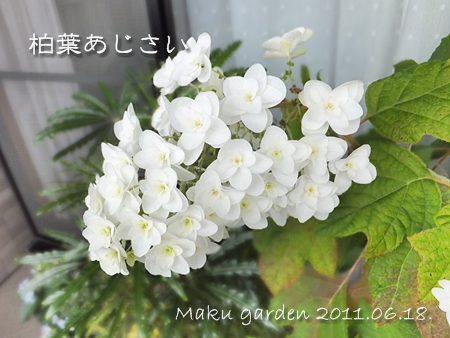 20110624-03.jpg