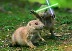 fighting_prairie_dogs.png