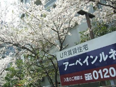 筑後川-2