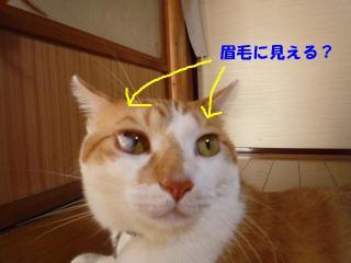 蜈・ー励・逵画ッ媽convert_20090827110920