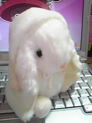 ケープウサギ